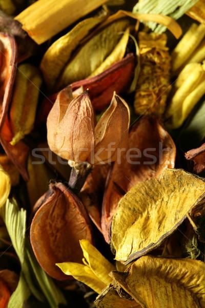 Stok fotoğraf: Kurutulmuş · doğal · çiçekler · sarı · turuncu