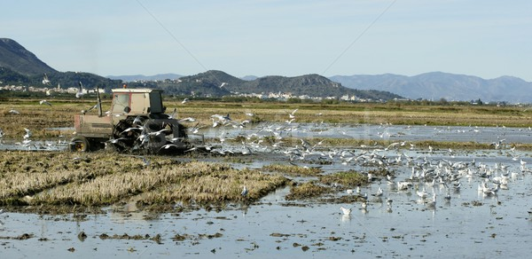 Arroz trator molhado campos gaivotas Espanha Foto stock © lunamarina