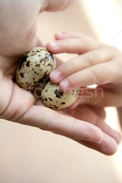 Yumurta anne el çocuklar bir Stok fotoğraf © lunamarina