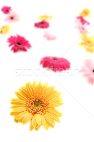 Gerbera yellow flower colorful blur flowers background Stock photo © lunamarina