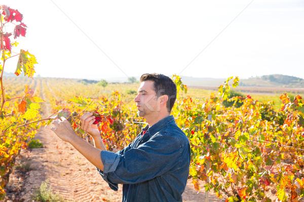 Mediterranean vineyard farmer checking grape leaves Stock photo © lunamarina