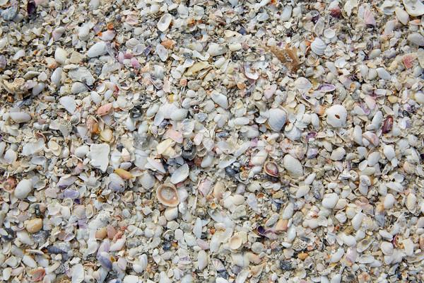 Florida Festung Strand Meer Muscheln Sand Stock foto © lunamarina