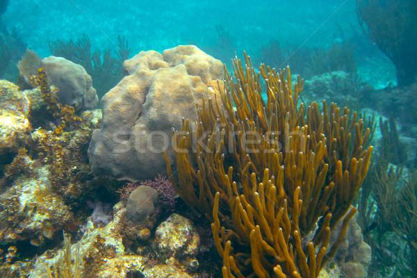Muhteşem caribbean Meksika plaj deniz arka plan Stok fotoğraf © lunamarina