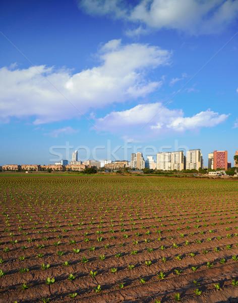 Valencia mezőgazdaság mezők sziluett Spanyolország város Stock fotó © lunamarina
