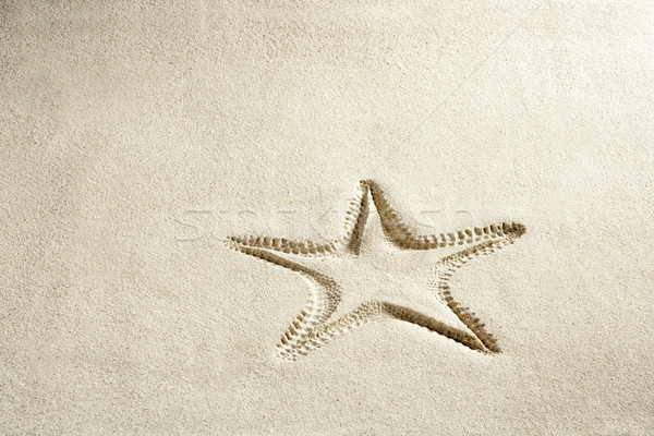 Plage starfish imprimer blanche Caraïbes sable Photo stock © lunamarina