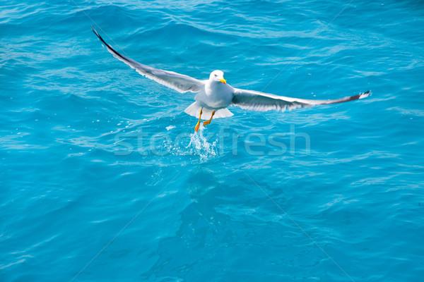 Vogel zeemeeuw zee water oceaan Blauw Stockfoto © lunamarina