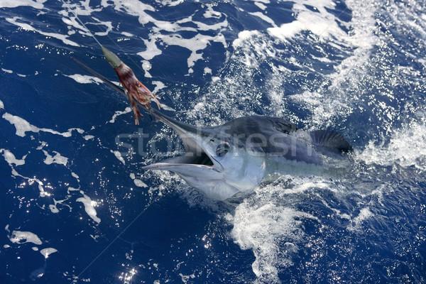 Belo branco real esportes pescaria projeto de lei Foto stock © lunamarina