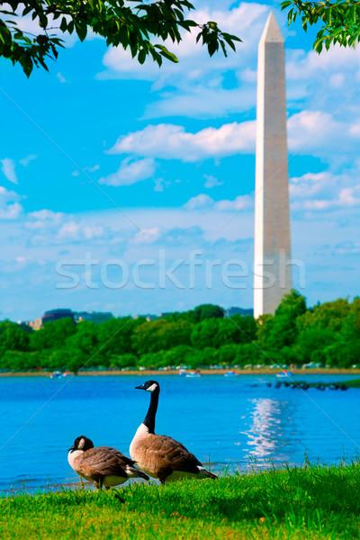 Stock photo: Washington Monument and Tidal Basin ducks DC