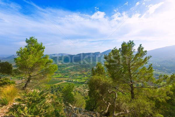 Majorca eiland Spanje hemel bomen rock Stockfoto © lunamarina