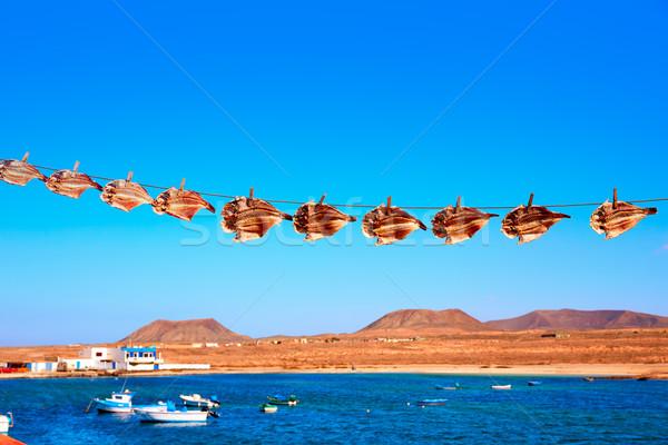 Secas papagaio peixe canárias praia paisagem Foto stock © lunamarina