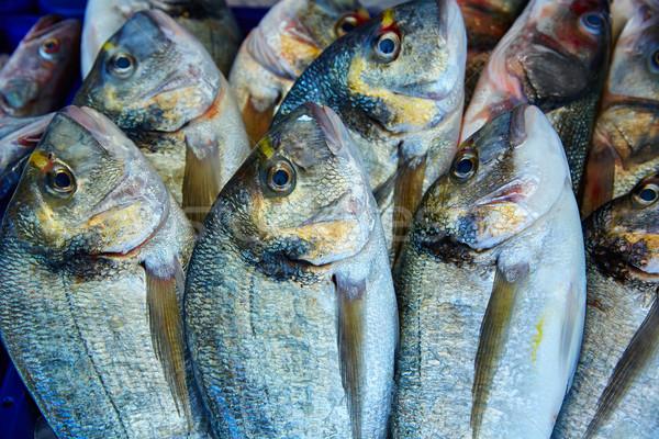 Pesce mediterraneo fila mare acqua Foto d'archivio © lunamarina