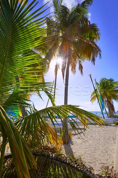 Clé ouest Floride plage palmiers USA Photo stock © lunamarina
