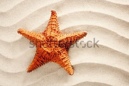 Foto d'archivio: Spiaggia · sabbia · bianca · starfish · simbolo · come