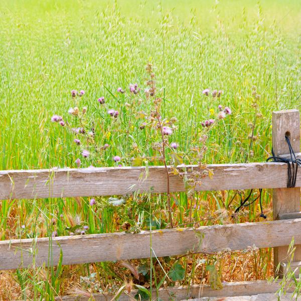 Verde prado madeira cerca campo tradicional Foto stock © lunamarina