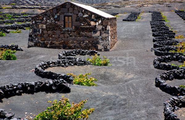 Bağ siyah volkanik toprak Stok fotoğraf © lunamarina