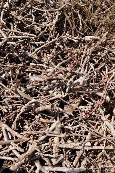 Kahverengi kurutulmuş yakacak odun model ahşap Stok fotoğraf © lunamarina