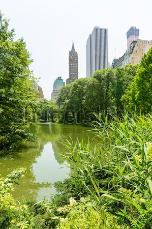 Central Park flowers Manhattan New York Stock photo © lunamarina