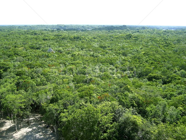 jungle aerial view in central america Mexico Stock photo © lunamarina