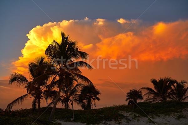 Naplemente égbolt kókuszpálma fák Karib narancs Stock fotó © lunamarina