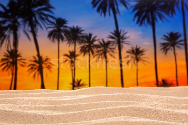 тропические пальма закат небе песчаная дюна пляж Сток-фото © lunamarina