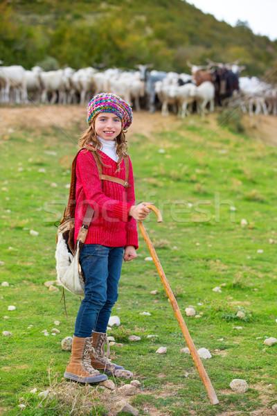 Kid girl shepherdess happy with flock of sheep and stick Stock photo © lunamarina