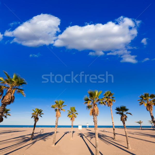Strand Valencia middellandse zee Spanje boom natuur Stockfoto © lunamarina