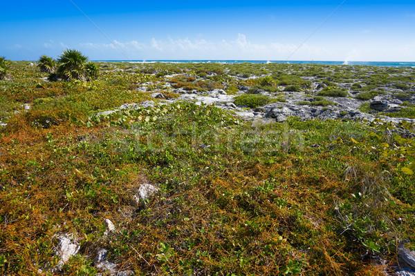 Akumal bay in Riviera Maya Mexico Stock photo © lunamarina