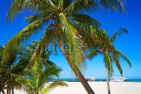 caribbean tropical beach white parasol coconut palm Stock photo © lunamarina