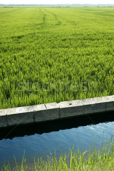 Rice field green meadow in Spain ditch Stock photo © lunamarina