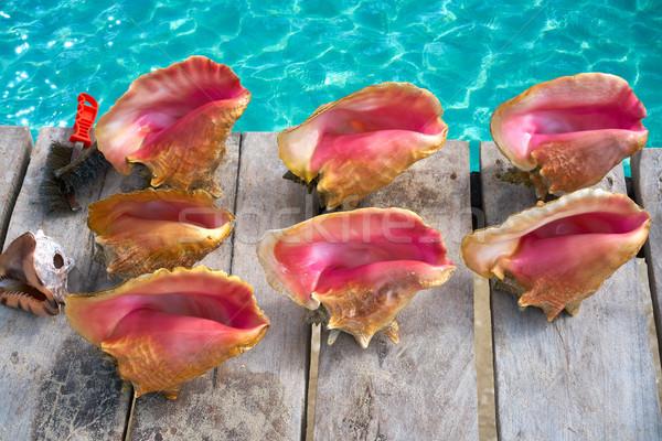 Caribbean seashells on a wooden pier Mexico Stock photo © lunamarina
