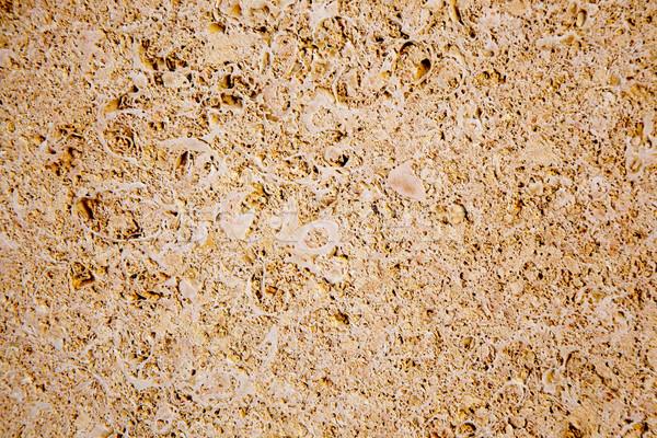 Calcário arenito textura animal conchas fóssil Foto stock © lunamarina