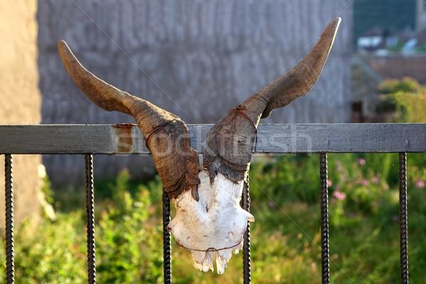 Capra corno fecondità simbolo metafora porta Foto d'archivio © lunamarina