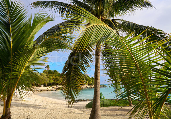 Akumal beach in Riviera Maya of Mexico Stock photo © lunamarina