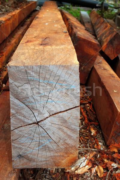 熱帯 木材 トランクス 熱帯雨林 ジャングル ラテンアメリカ ストックフォト © lunamarina
