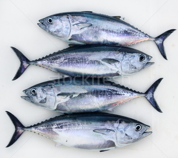 bluefin four tuna fish Thunnus thynnus catch row Stock photo © lunamarina