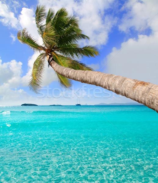 Palm tree in tropical perfect beach at Ibiza Stock photo © lunamarina
