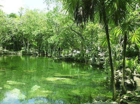cenote Riviera Maya jungle mayan Quintana Roo Stock photo © lunamarina