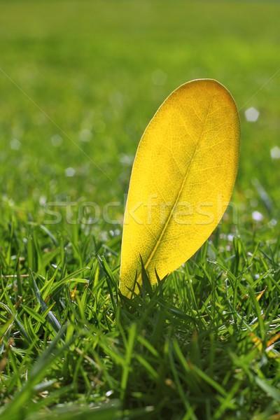 yellow autumn fall leaf on garden green grass lawn Stock photo © lunamarina