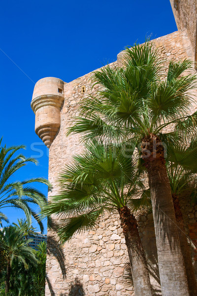 Elche Elx Alicante el Palmeral Palm trees Park and Altamira Pala Stock photo © lunamarina