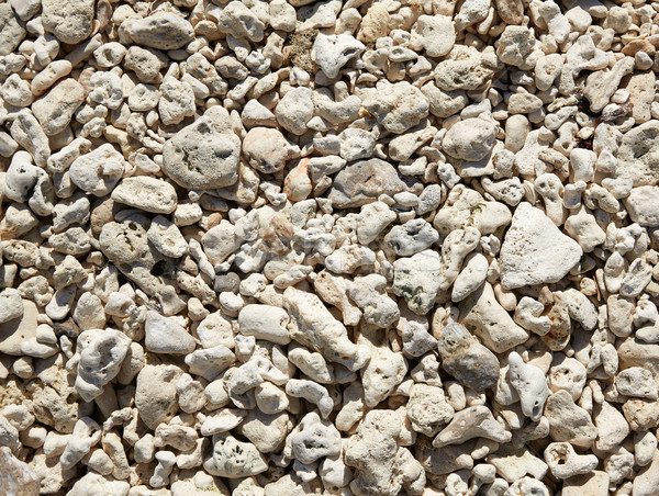 Key West beach shells sand detail in Florida Stock photo © lunamarina
