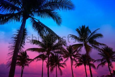 Stockfoto: Miami · strand · zuiden · zonsondergang · palmbomen · Florida