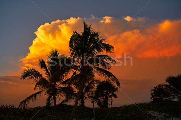Sunset sky coconut palm trees in Caribbean Stock photo © lunamarina