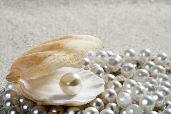 beach white sand pearl shell clam macro Stock photo © lunamarina