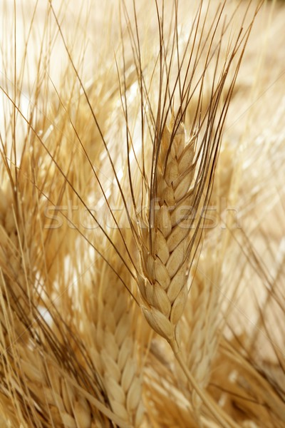 Stockfoto: Gouden · tarwe · granen · stilleven · hout · natuur