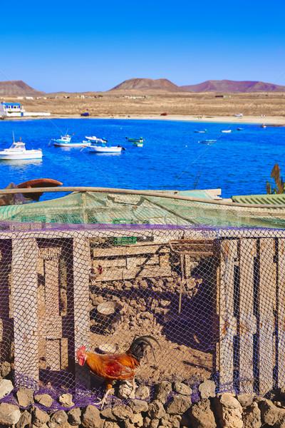 Канарские острова деревне Испания петух подробность пляж Сток-фото © lunamarina