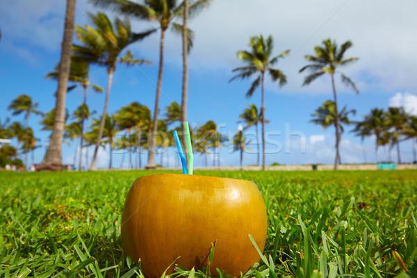Майами юг пляж кокосового Флорида пить Сток-фото © lunamarina