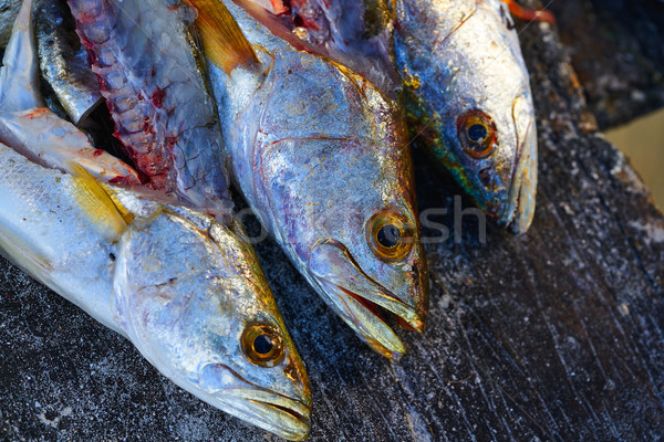 Croaker Corvina fillet fish in Mexico Stock photo © lunamarina