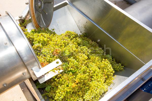 chardonnay corkscrew crusher destemmer in winemaking Stock photo © lunamarina