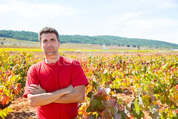 Gazda büszke szőlőskert ősz arany piros Stock fotó © lunamarina