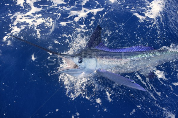 Stock fotó: Gyönyörű · fehér · igazi · sport · halászat · számla
